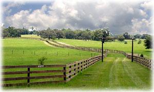 Horse Properties In Tampa Florida